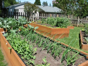 View of my raised bed garden